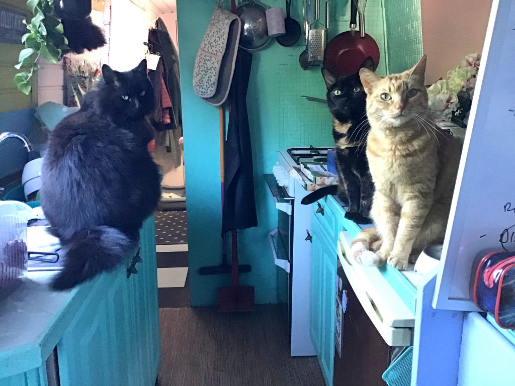 Photograph of the inside of the houseboat kitchen area. The wooden cupboards are painted a pastel greeny blue. On top of the counters tops are 3 cats. On the left is a black cat with green eyes. On the right side is a black and ginger cat with green eyes and a ginger tabby cat with green eyes. They are all turned to face the camera. In the background there are kitchen utensils hanging and some plants.