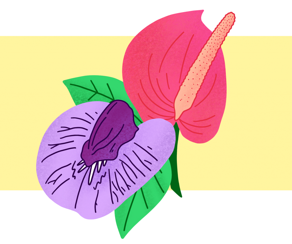 On a creamy yellow background the purple flower from above is entwined with a pink, smoother flower, with an erect peach-coloured stamen that looks phallic. Their green leaves are crushing together slightly in what looks like ecstasy.