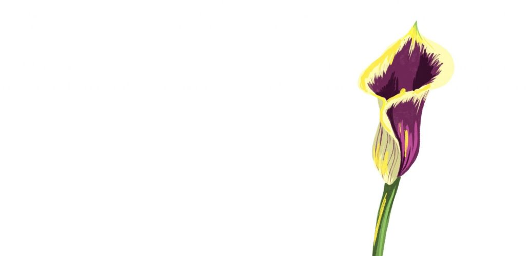 an illustration of of a purple and yellow lilly, a tube shaped plant with with purple petals and outer yellow petals