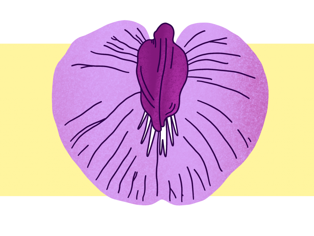 On a creamy yellow background is an illustration of a lilac flower, petals spread open with a darker purple bud in the centre, giving the impression of a spread vagina with the clitoris exposed.