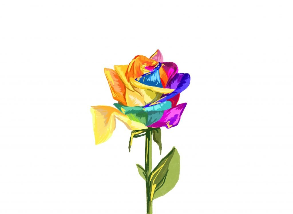 an illustration of a multicoloured rose, petals an array of colours including pink, red, blue, yellow and orange